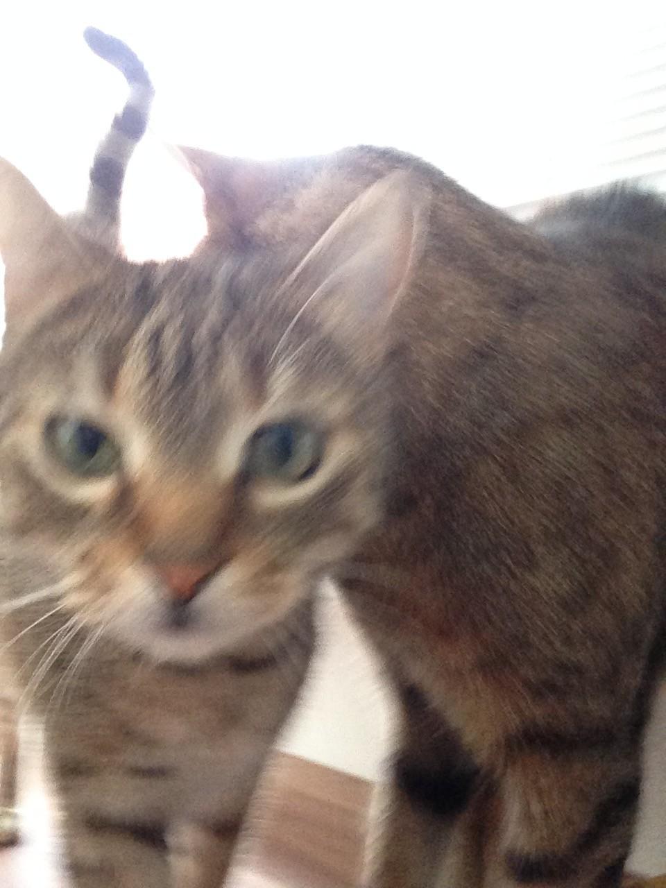 cityflower cats
